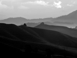 Sunrise at Cameron Highlands