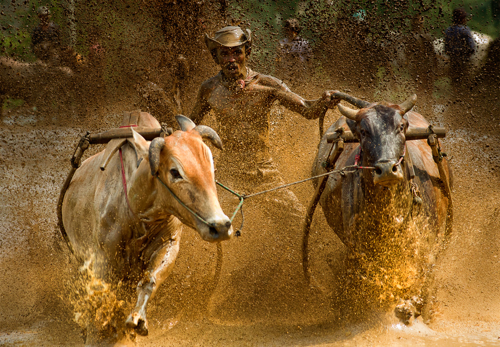 A jockey with his cowboy hat riding the bulls