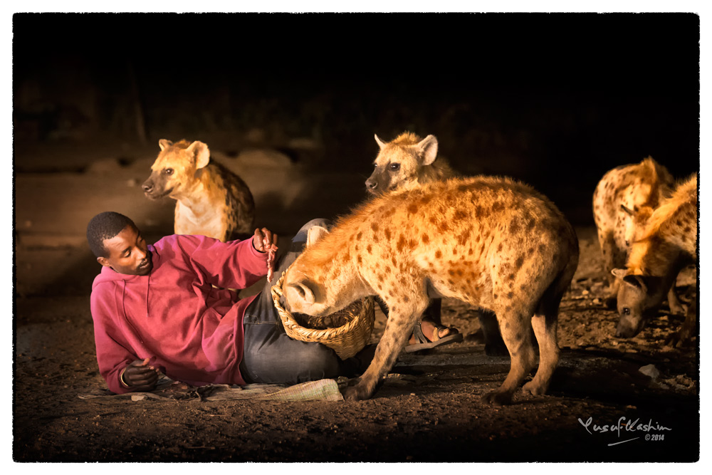 Although I was a bit wary about getting close, the Hyena Man seemed quite at ease among the Hyenas.