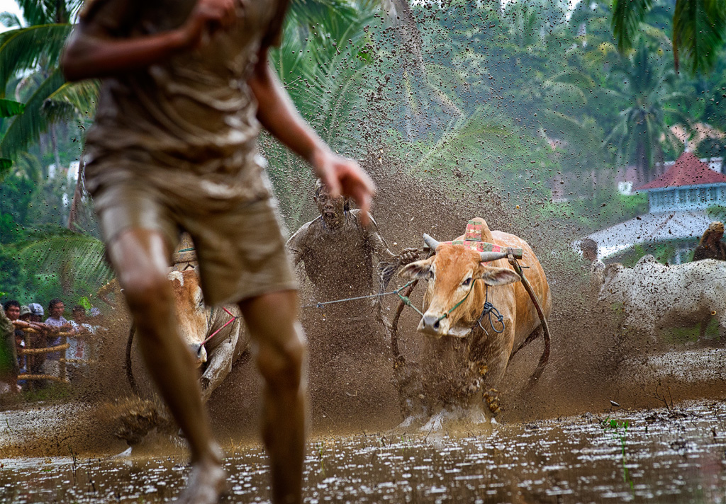 Sometimes you need to run out of the way of the charging bulls