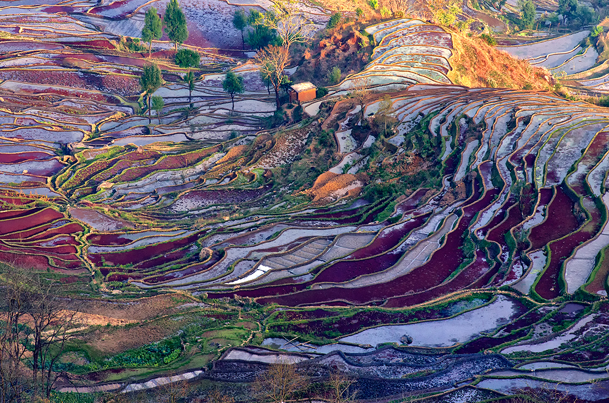 The multi-colored rice terraces in the setting sun.