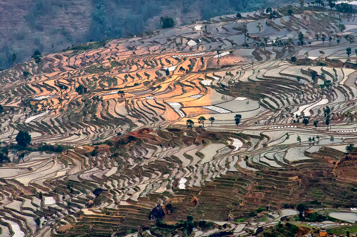 Terraced rice fields from a vantage point