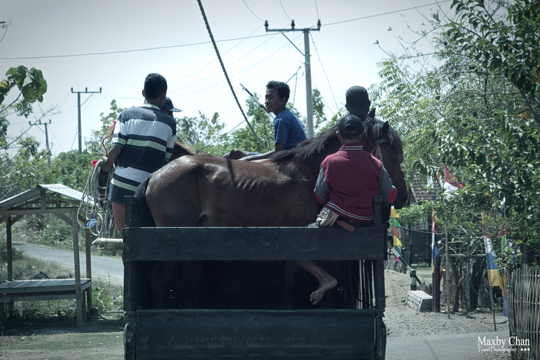 The horses were transported to the race course or the practice session.